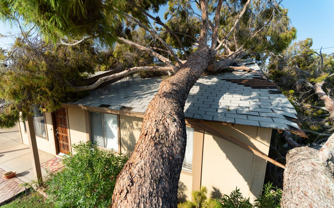 Top 5 Ways a Tree Service Can Help You Recover from Storm Damage