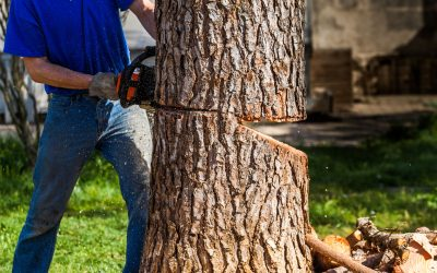 Signs You May Need to Remove a Tree