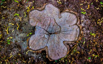 4 Reasons Why You Should Always Remove Tree Stumps