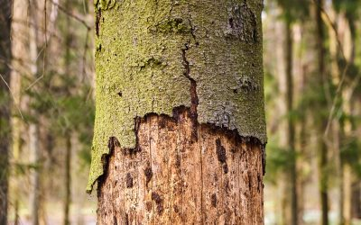 How to Save a Dying Tree: A Basic Guide