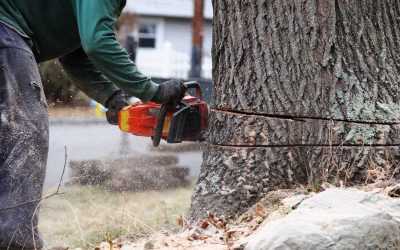 7 Questions to Ask When Hiring a Tree Removal Company
