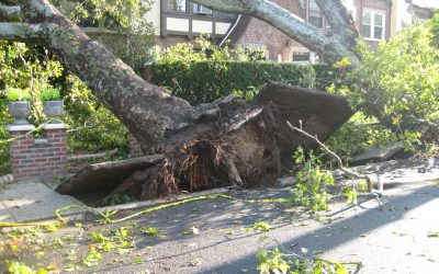 Landscape Dangers: A Guide on Emergency Tree Removal