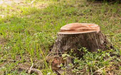 The Dangers of DIY Tree Stump Removal: What You Need to Know