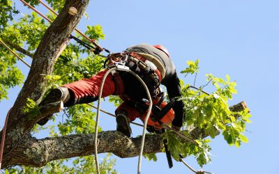 Tree Trimming 101: What You Need to Know