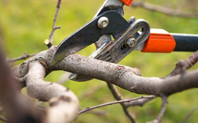 6 Essential Tree Maintenance Tips for Strong and Healthy Trees