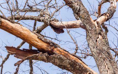 How to Know If Your Tree Is Dead Or Dying