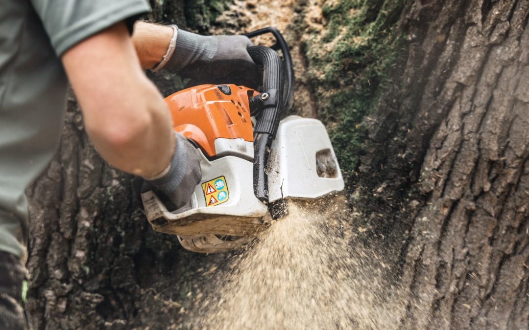 5 Tips for Choosing the Best Tree Removal Service