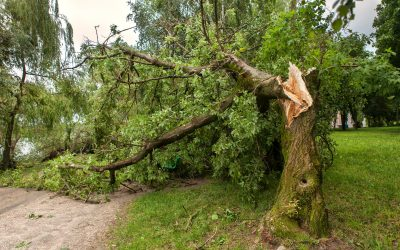 7 Benefits Of Hiring a Professional Tree Removal Service